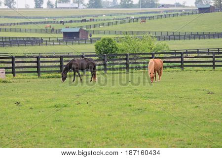 Horses graze in the pastures at Kentucky Horse Park, a premier attraction in Kentucky.