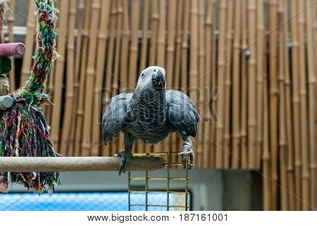 Parrot Jaco sits on a cage close up