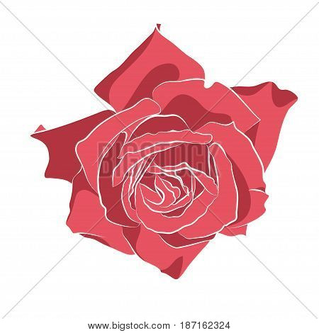 Beautiful hand drawn stencil rose, isolated on white background. Botanical silhouette of flower Vector illustration.