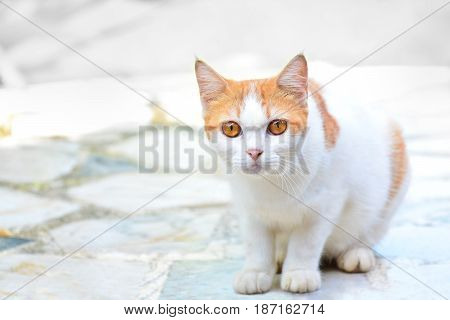 The cute cat sits there looking at something suspiciously on the marble floor with a white background Copy space