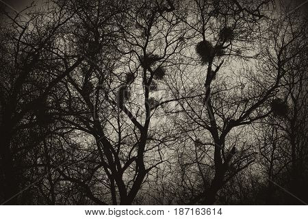 Background, texture of the mysterious trees with the nests. Tinted image Sepia