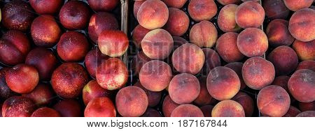 Peaches and nectarines on the counter for sale in a grocery shop. Crop. View from above.