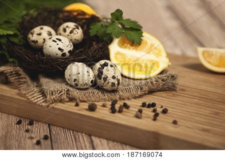 Quail eggs - Quail eggs nest against the background of an old brown tree, selective approach.