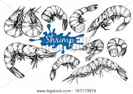 Hand drawn sketch style seafood set. Shripms, prawns collection vector illustrations.