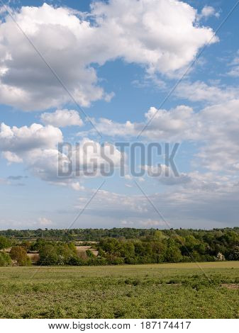 A Vertical Shot Of A Countryside Scene With Grass At The Bottom And Trees In The Distance As Well As