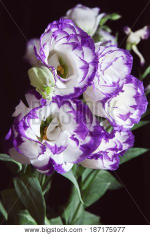 bouquet of vivid flower lisianthus
