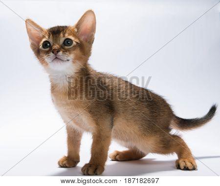 Cute grey striped kitten. Adorable pet. Small heartwarming kitten. Little cat.