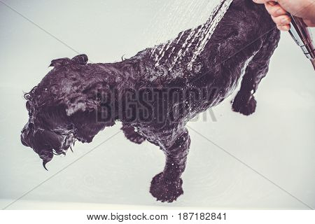 Small black dog having a bath in a bathroom