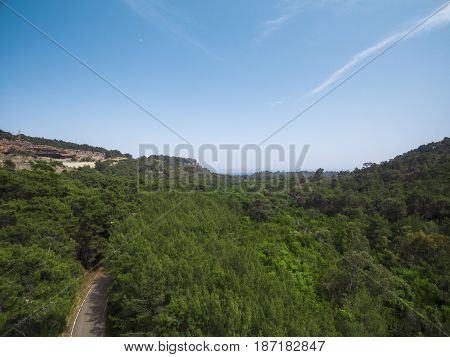 Aerial photograph of evergreen trees on sunny day