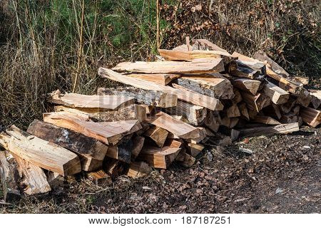 Fresh Stacked And Splitted Wood-pile In Forest