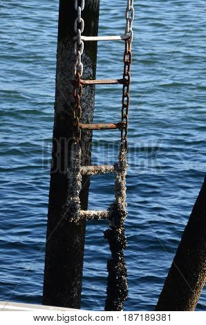dock ladder  incrusted with barnacles weathered by the ocean waves.