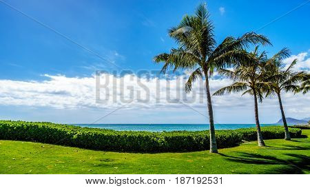 Palm trees swaying in the wind under blue sky at Ko Olina on the West Coast of the Hawaiian island of Oahu