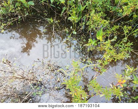 green plants and muddy water with green snake