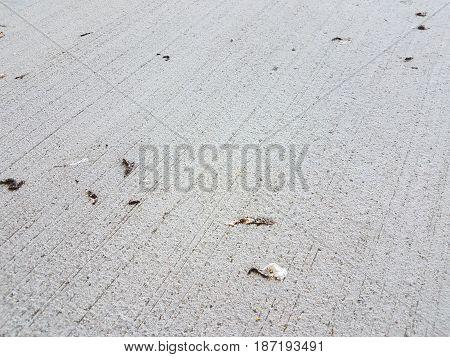 Grey Cement Close Bird Image & Photo (Free Trial) | Bigstock