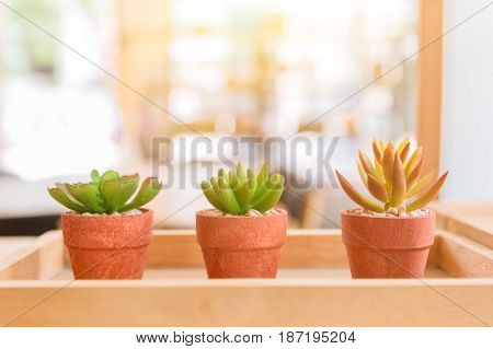 Modern Cafe Nature Small Plant In Pot Or Home Decoration.