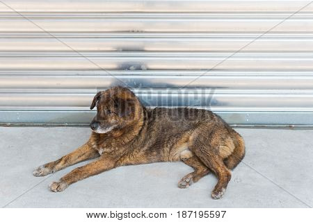 Dog lying in front of a metallic garage door China