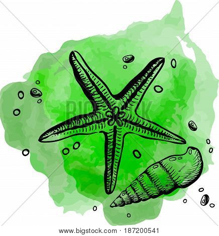 Finest quality beautiful natural open shell and star - close up realistic single valuable object image vector illustration on the green background