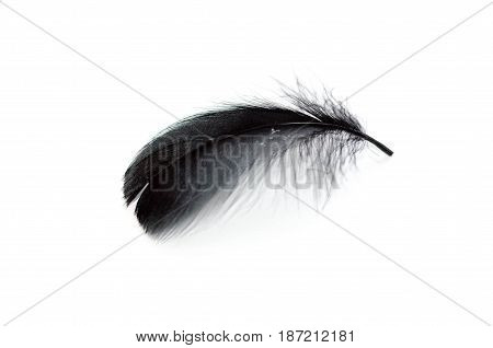 Black Feather On The White Background.clipping Path Inside.