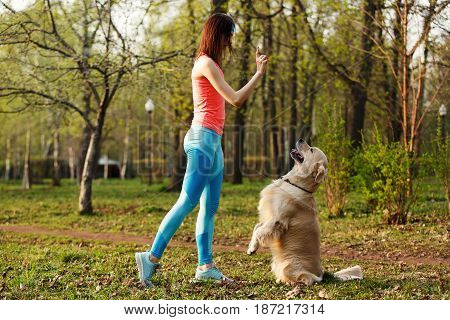 Labrador performs commands of girl in park