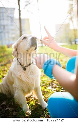 Woman training dog in collar on lawn in spring