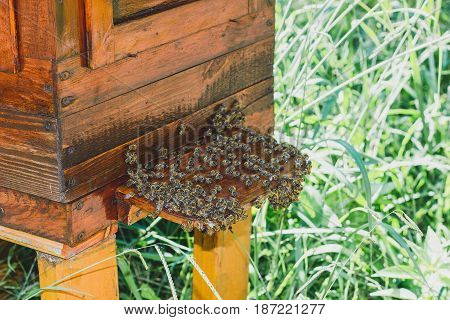 Swarm of bees that sit on the hive