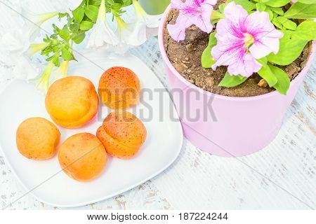 Orange ripe apricots on a white plate white and pink petunia in a flowerpot on a white wooden table in a summer garden close-up