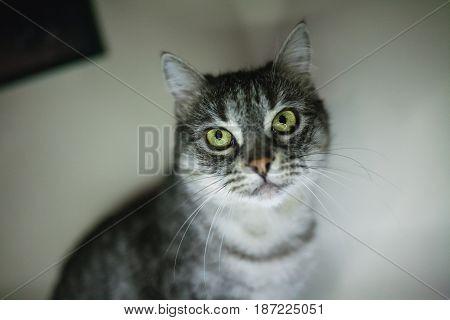 sad home cat sitting on window at day