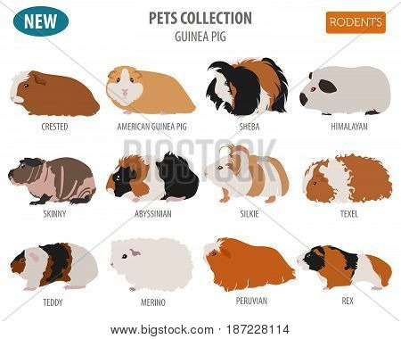 New Collection Dog Toy_1