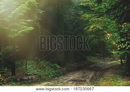 Magic dark forest. Autumn forest scenery with rays of warm light. Mistic forest. Beskid Mountains. Poland