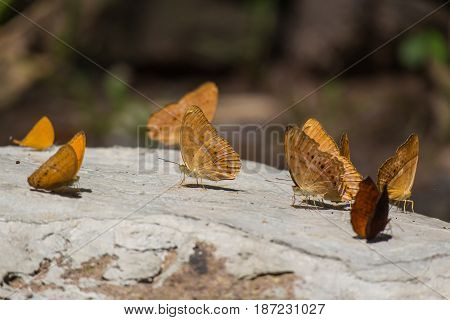 Brown butterflies on the stone under sun light