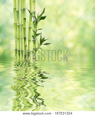Several stem of Lucky Bamboo (Dracaena Sanderiana) with green leaves reflected in a water surface with small waves on natural background with copy-space