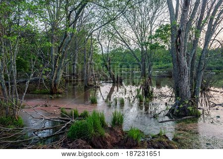 A wetland at dusk as seen in Englishtown New Jersey.