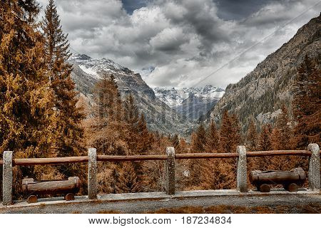 autumn colors in the forest with snowy mountains in the background and fence in the foreground