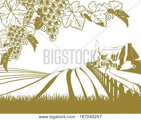 A vineyard rolling hills scene illustration with grape vines