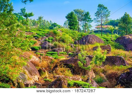 Beautiful Landscape With Green Tea Plantations And Mountain, Munnar, Kerala, India Travel Background
