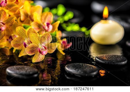 Beautiful Spa Composition Of Blooming Twig Orange Orchid Flower, Green Foliage With Water Drops, Can