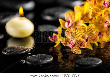 Beautiful Spa Composition Of Blooming Twig Orange Orchid Flower With Water Drops, Candle And Zen Bas