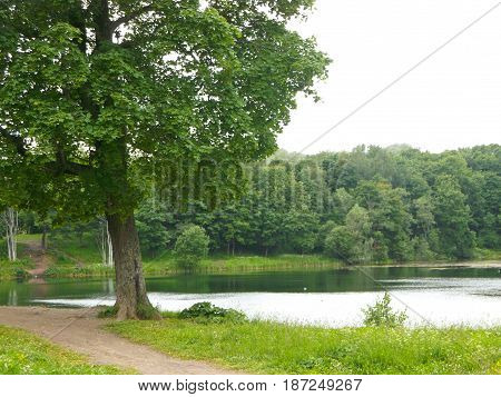 view the path near the lone tree on the shore of lake