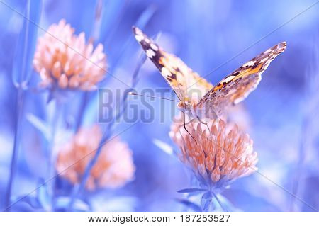 Butterfly on a beautiful background. Soft focus