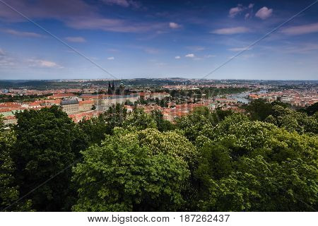 View To Prague Castle, St. Vitus Cathedral And Vltava River In Prague With Green Trees In Foreground