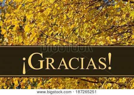 Spanish Thank You Greeting Some fall leaves with text Gracias
