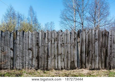 Unpainted an old gray wooden fence and trees