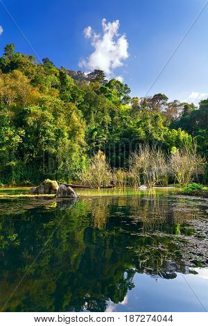 A swampy lake in the jungle. Tall tropical trees in the background