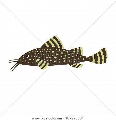Catfish on white background. Aquarium fish. Vector illustration