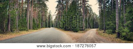 asphalt road cross on cloudy spring day in the forest