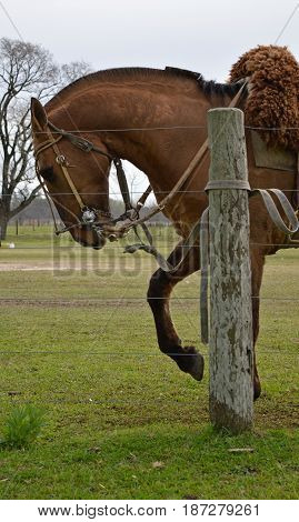 Brown horse in field in cloudy day