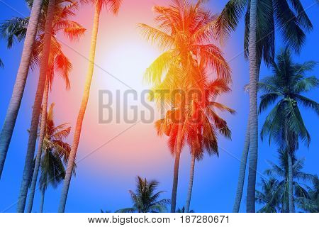 Retro photo background with palm trees and sunshine paradise island. Template for design, poster, business card