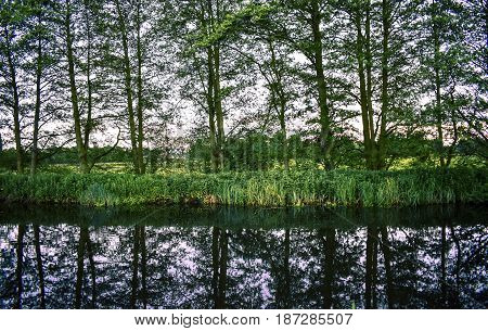 Mirror-like reflection of trees on the river (Can you spot the moorhen?)