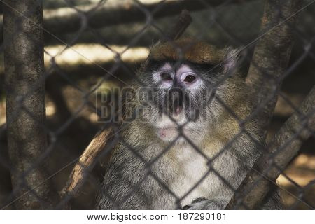 A monkey in a cage in a zoo