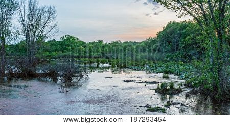 A panoramic view of this wetland in Englishtown New Jersey.